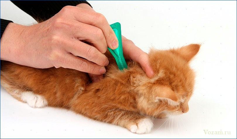 Как вывести глистов у кошки в домашних условиях 79